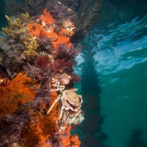 Discover Local Diving in Melbourne
